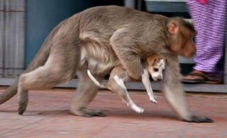 C'est animaux que l'on nomme les bêtes 44643610