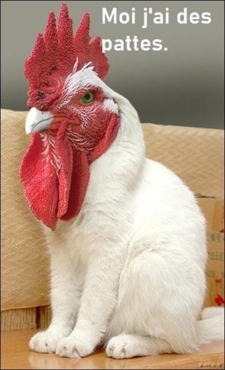 poules sans bec ni pattes 8f4b1e10