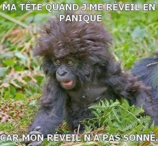 humour en images II 953ec610