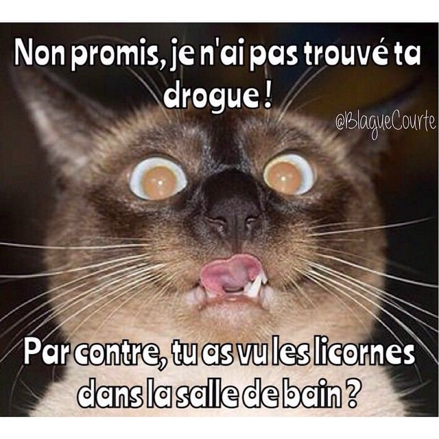 humour en images II - Page 17 982fcd10