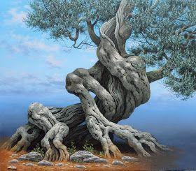 Des oliviers millénaires 9ce49e10