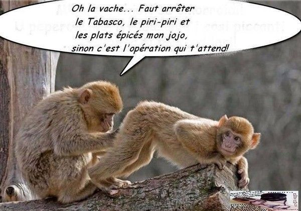 humour en images II - Page 10 Aa3f1f11