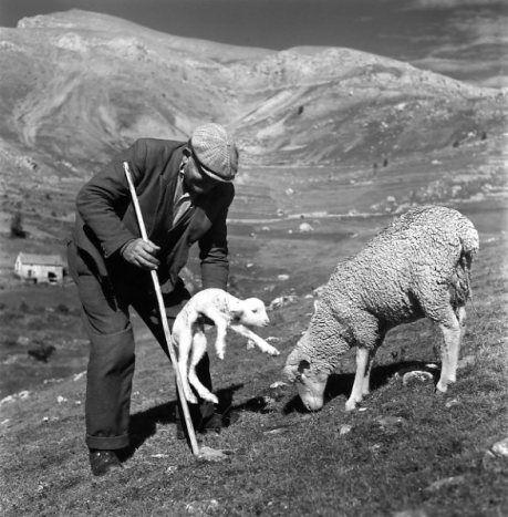 Les bergers d'antan et d'aujourd'hui B00b4110