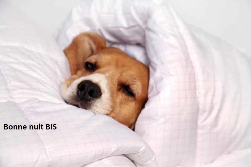 Bonne nuit les petits !! - Page 13 Chien-12