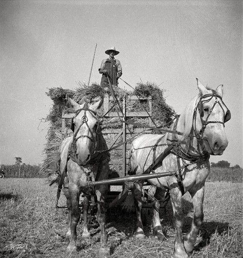 La vie d'autrefois dans les fermes - Page 2 D750c810