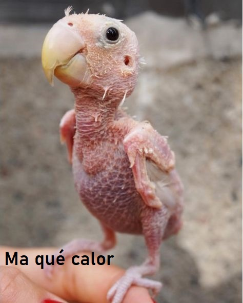 humour en images II - Page 15 Ddbe9810