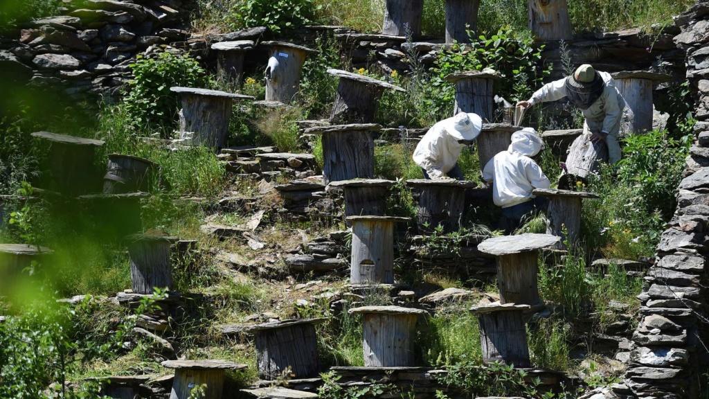 Les abeilles noires Des-ap10