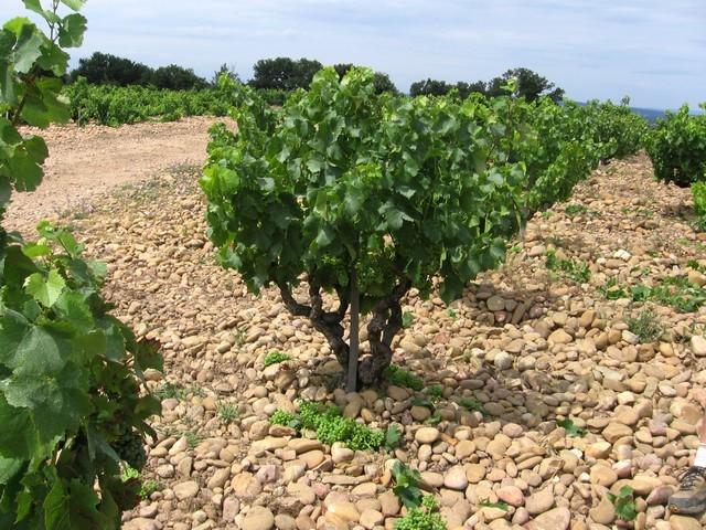 Les vignes de mon pays Domain11