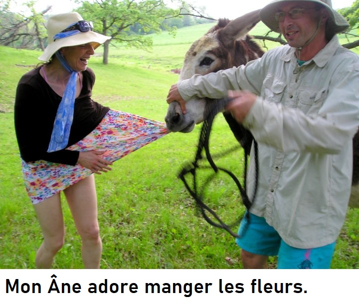humour en images II - Page 10 Donkey10