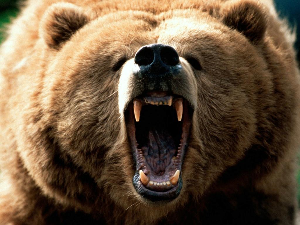 Italie. Un ours attaque un militaire. F30d7211