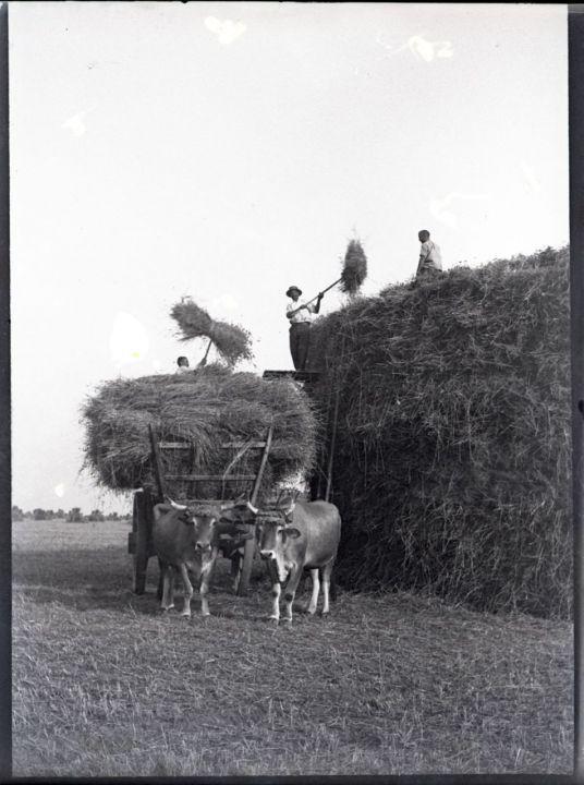 La vie d'autrefois dans les fermes - Page 2 F7e24a10