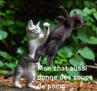 humour en images II - Page 9 F9763111