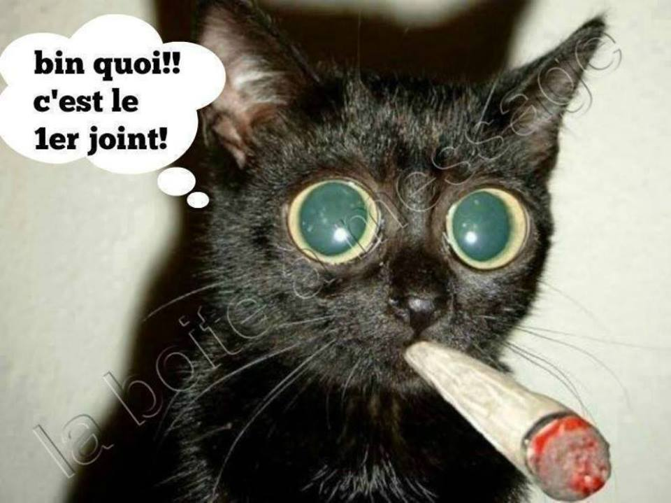 humour en images II - Page 20 Humour11