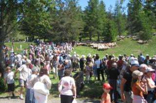 28 éme fête de la transhumance a l'Esperau Mont-Aigoual Img_7011