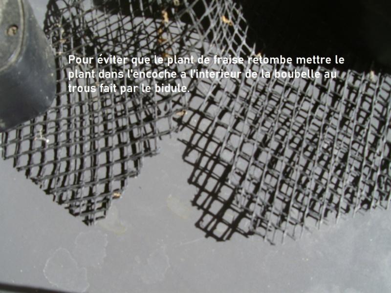 Mon Pote Agé II - Page 12 Imgp2516