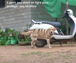 humour en images II - Page 4 Le-chi10