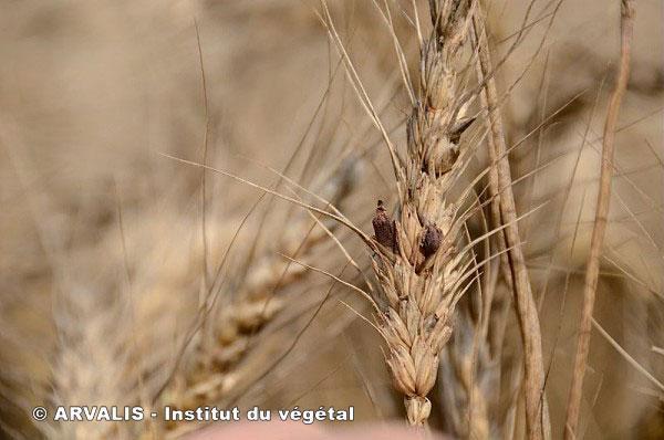 le zéro pesticide ! Sans-t10