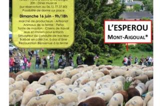 28 éme fête de la transhumance a l'Esperau Mont-Aigoual Transh11