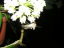 Thème du mois d'août 2013 : les insectes P6200613