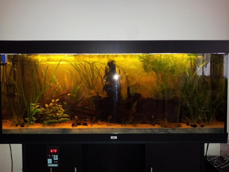 mon premier aquarium,un 450l 20130314