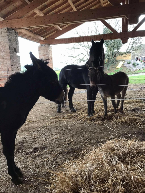 Cacahuete, âne ONC de 5 ans, sauvée par Caroline !!!! Recei124
