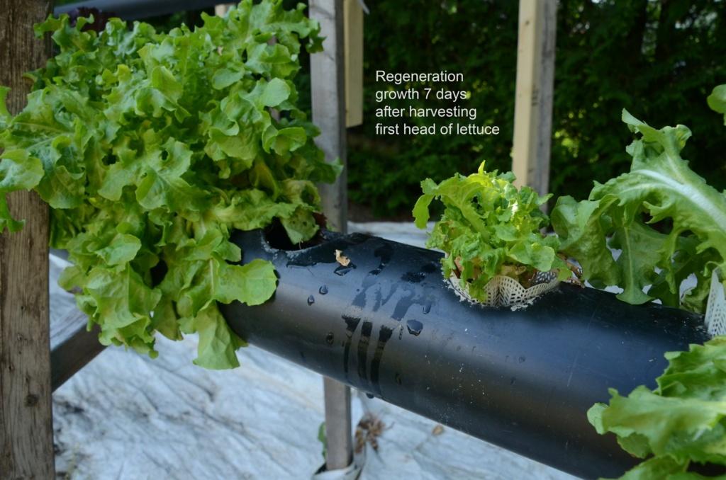 Beginner Gardener - Page 2 36678010