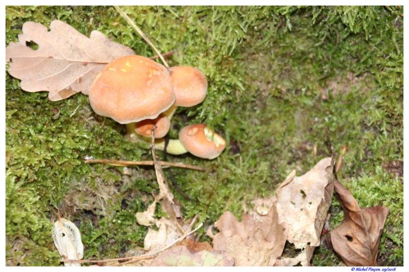 [fil ouvert] les champignons - Page 9 Dsc01358