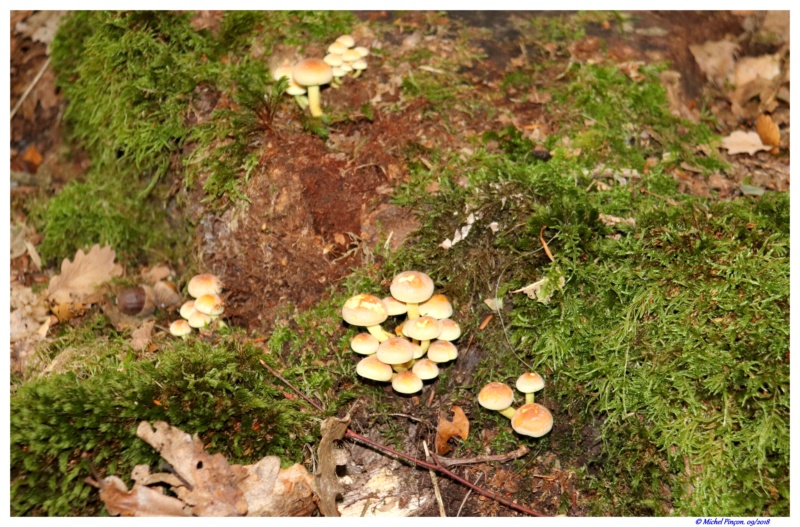 [fil ouvert] les champignons - Page 9 Dsc01359