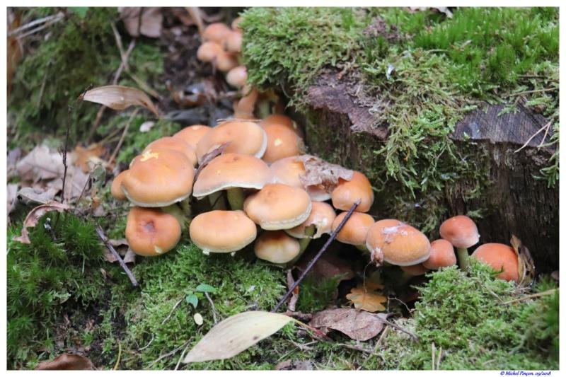 [fil ouvert] les champignons - Page 9 Dsc01360