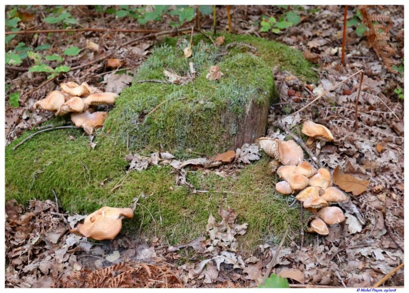 [fil ouvert] les champignons - Page 9 Dsc01365