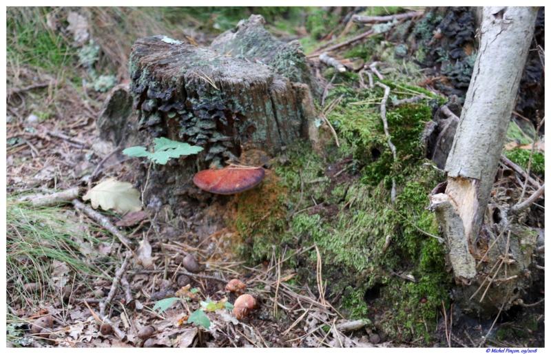 [fil ouvert] les champignons - Page 9 Dsc01367