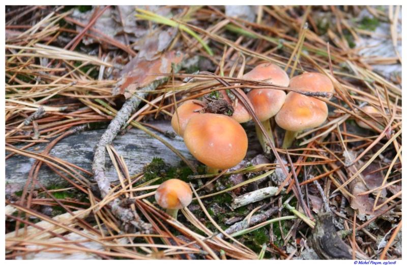[fil ouvert] les champignons - Page 9 Dsc01407