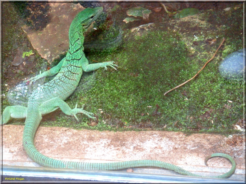 [Fil ouvert à tous] Reptiles, serpents, tortues, amphibiens, ... - Page 7 Dsc01420