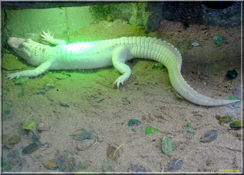 [Fil ouvert à tous] Reptiles, serpents, tortues, amphibiens, ... - Page 7 Dsc01421