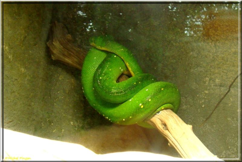 [Fil ouvert à tous] Reptiles, serpents, tortues, amphibiens, ... - Page 7 Dsc01423