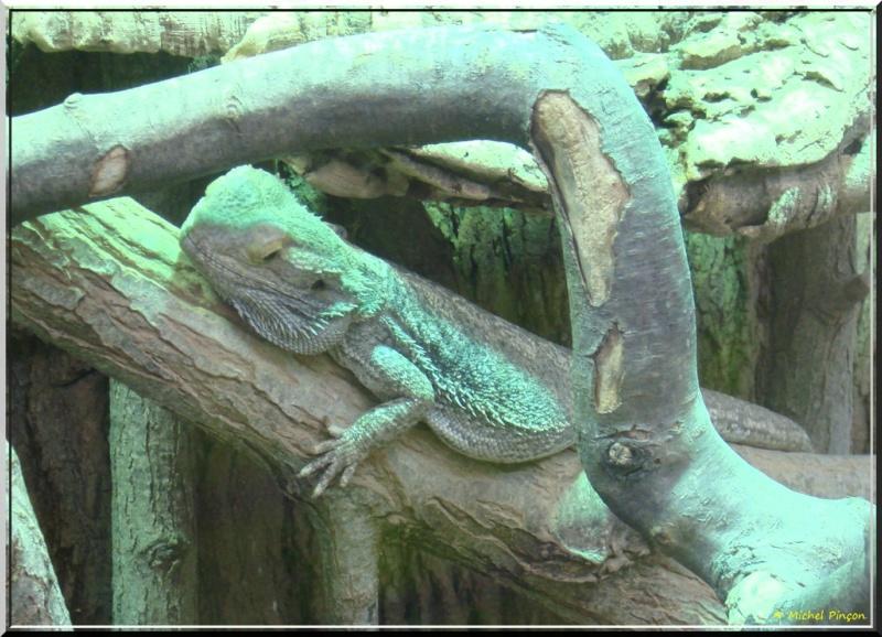 [Fil ouvert à tous] Reptiles, serpents, tortues, amphibiens, ... - Page 7 Dsc01424
