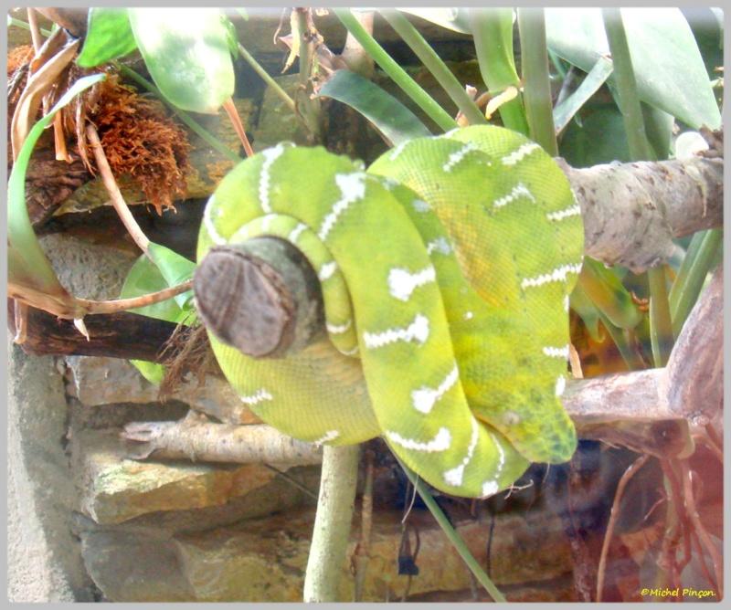 [Fil ouvert à tous] Reptiles, serpents, tortues, amphibiens, ... - Page 7 Dsc01425