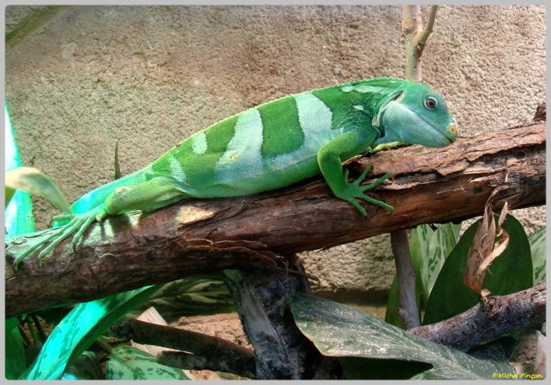 [Fil ouvert à tous] Reptiles, serpents, tortues, amphibiens, ... - Page 7 Dsc01426