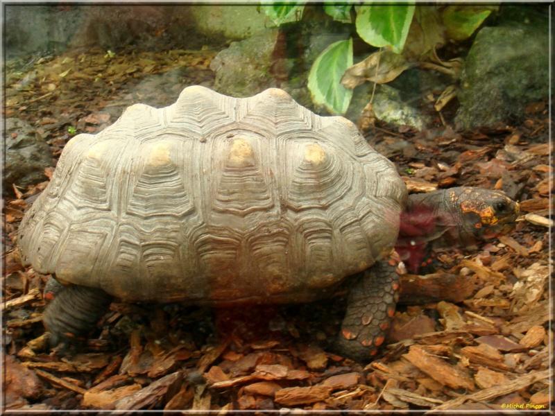 [Fil ouvert à tous] Reptiles, serpents, tortues, amphibiens, ... - Page 7 Dsc01428