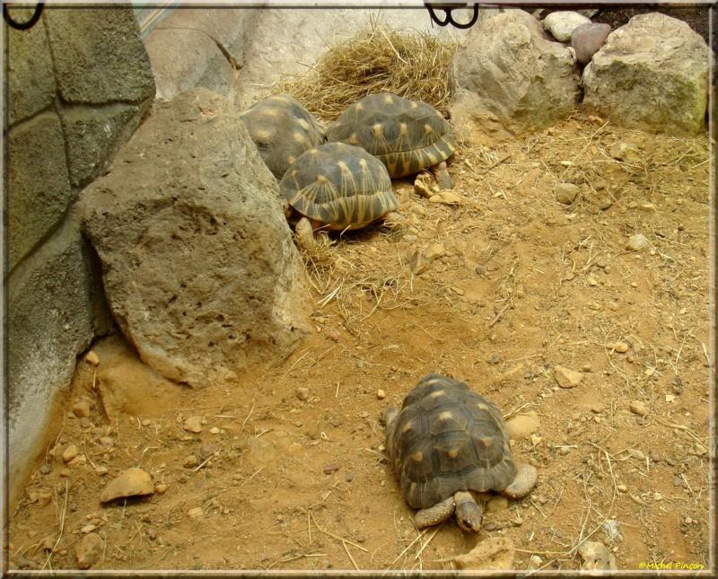 [Fil ouvert à tous] Reptiles, serpents, tortues, amphibiens, ... - Page 7 Dsc01429