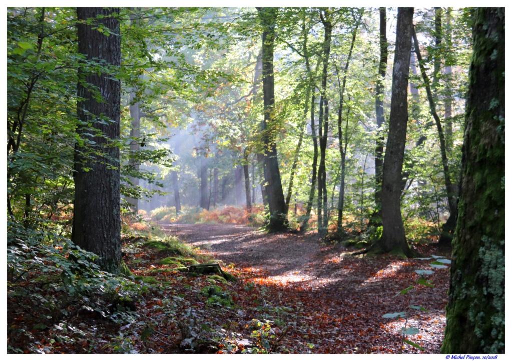 [fil ouvert] la forêt dans tous ses états - Page 19 Dsc01464