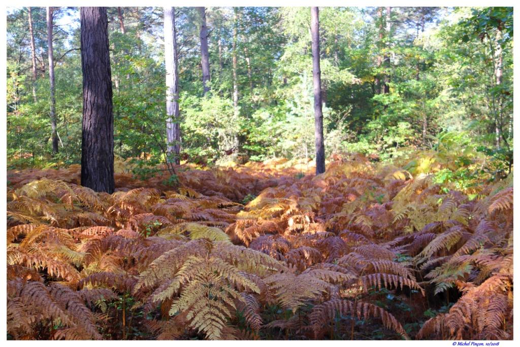 [fil ouvert] la forêt dans tous ses états - Page 19 Dsc01466