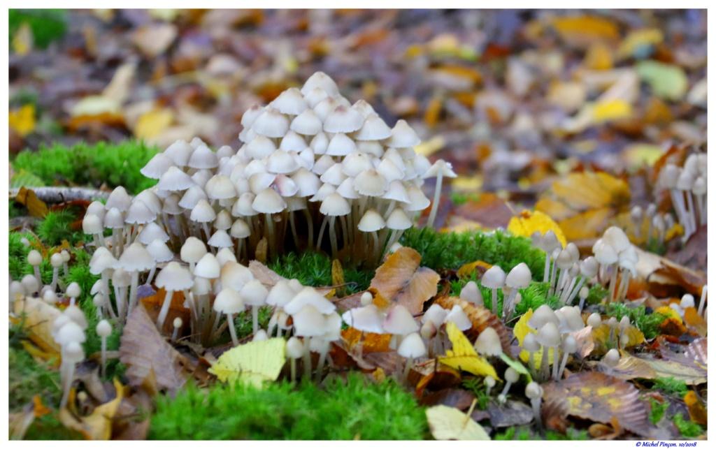 [fil ouvert] les champignons - Page 9 Dsc01470