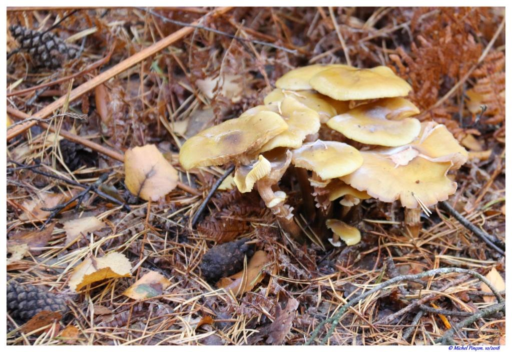 [fil ouvert] les champignons - Page 9 Dsc01472