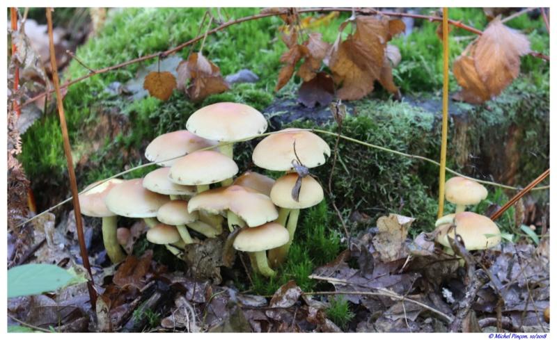 [fil ouvert] les champignons - Page 9 Dsc01478