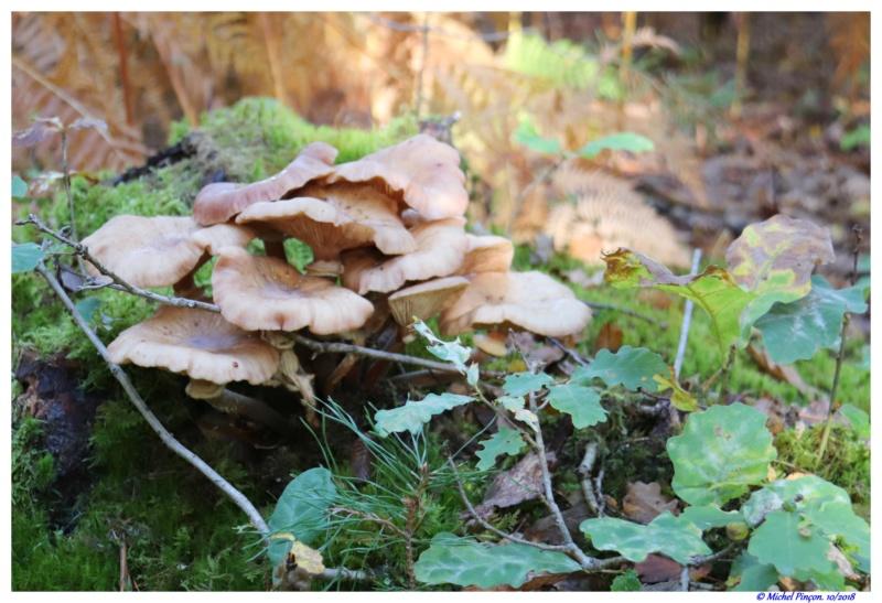 [fil ouvert] les champignons - Page 9 Dsc01480