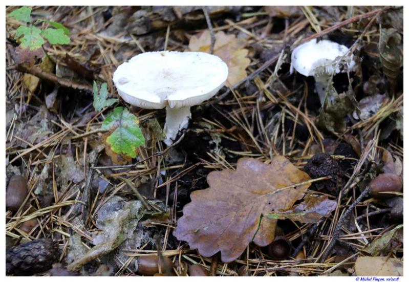 [fil ouvert] les champignons - Page 9 Dsc01481