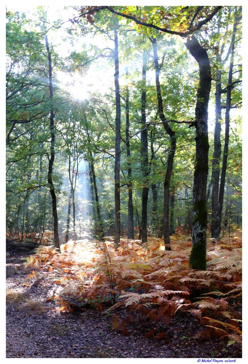 [fil ouvert] la forêt dans tous ses états - Page 19 Dsc01484