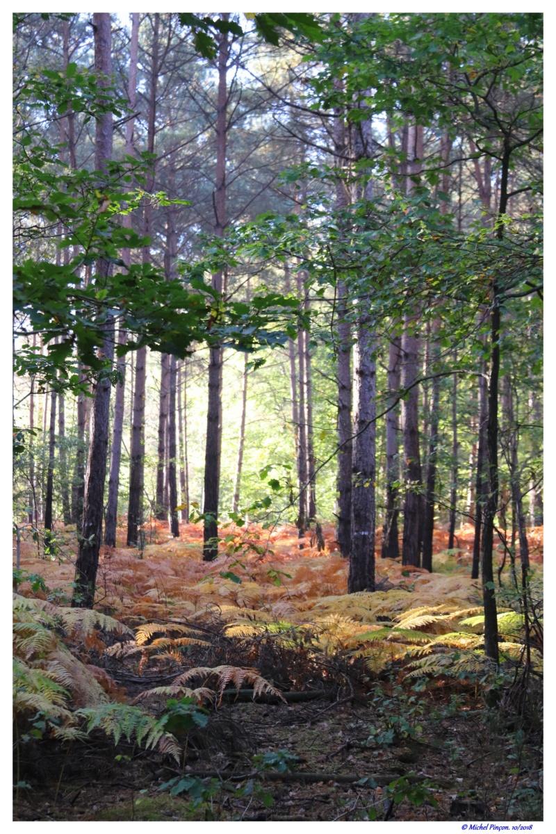 [fil ouvert] la forêt dans tous ses états - Page 19 Dsc01485