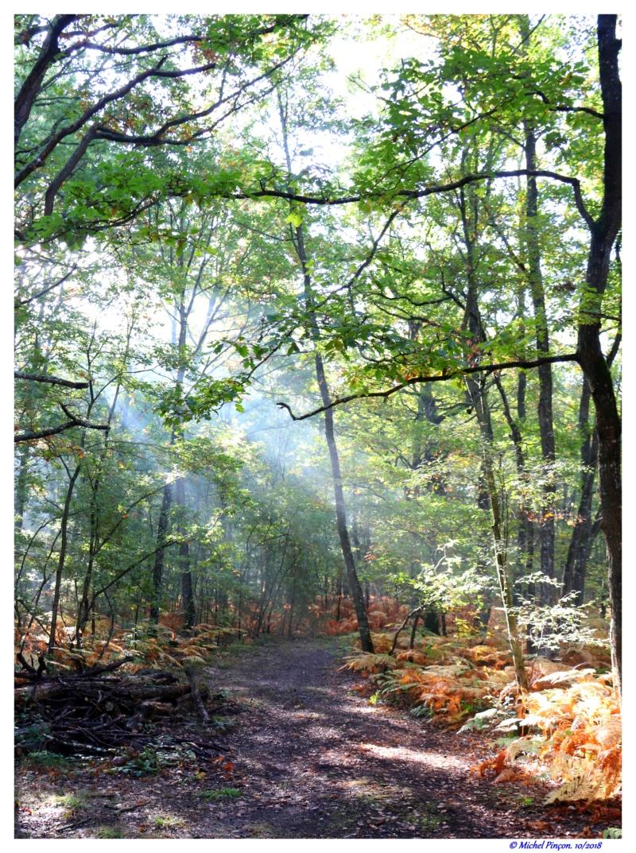[fil ouvert] la forêt dans tous ses états - Page 19 Dsc01488